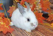 Кролик декоративный. Ручные малыши крольчата разных пород